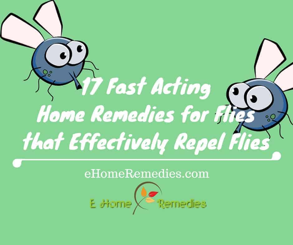17 Fast Acting Home Remedies for Flies that Effectively Repel Flies