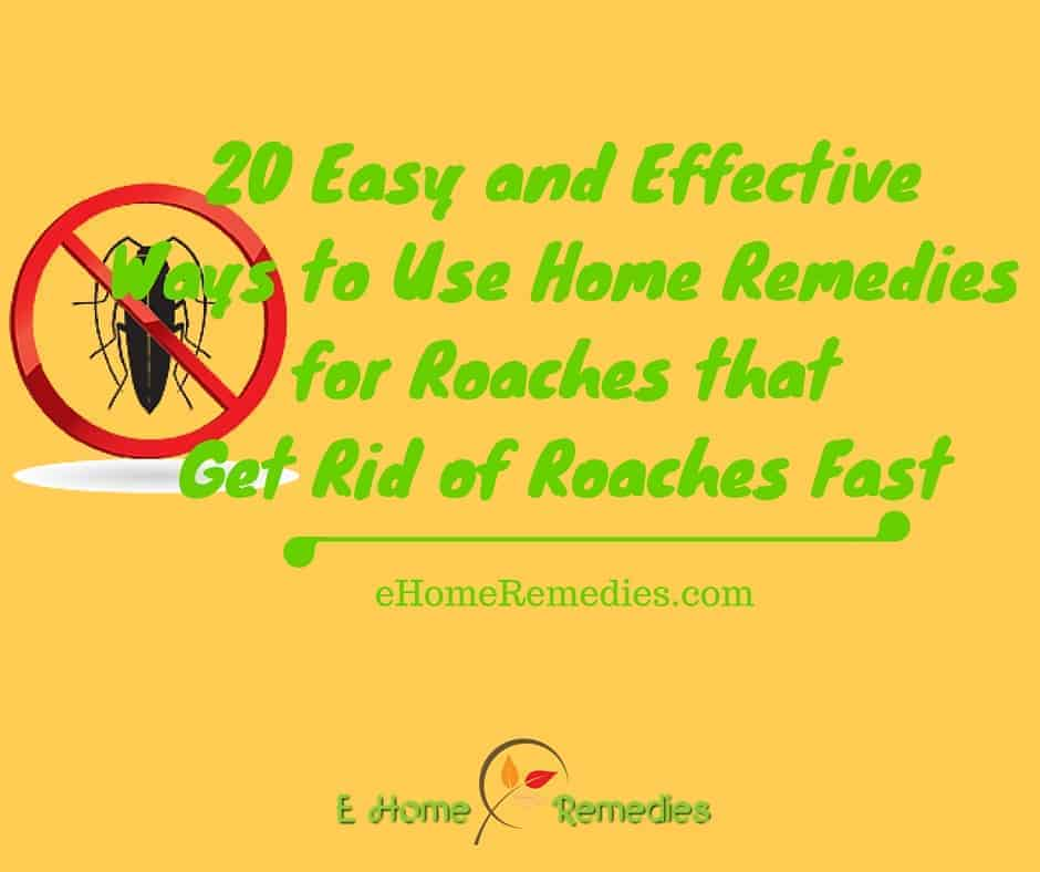 20 Easy and Effective Ways to Use Home Remedies for Roaches that Get Rid of Roaches Fast