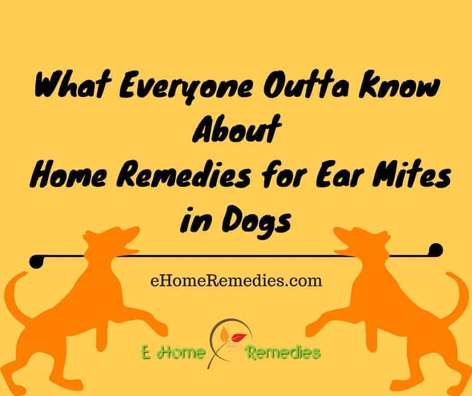 What Everyone Outta Know About Home Remedies for Ear Mites ...