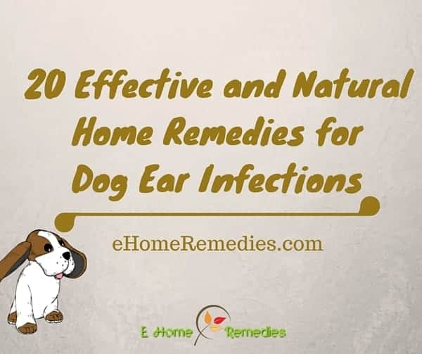 Home Treatment For Infected Dog Ears