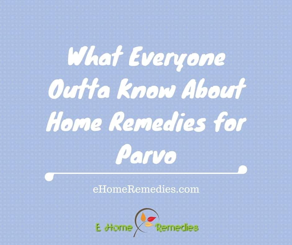 what everyone outta know about home remedies for parvo
