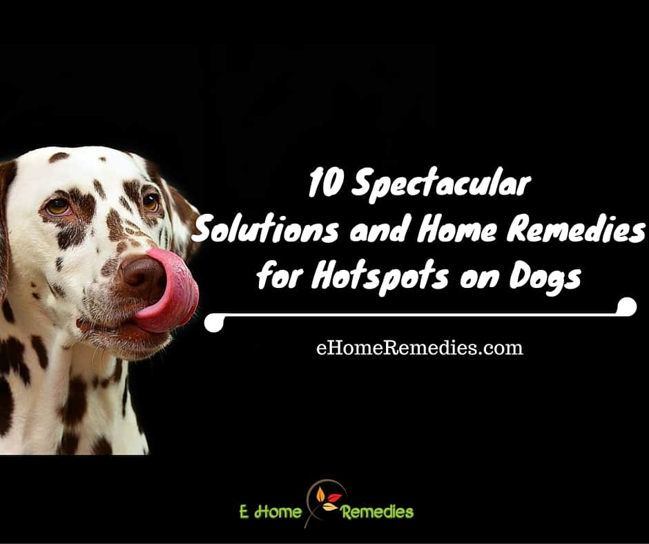 10 Spectacular Solutions and Home Remedies for Hotspots on Dogs That Will Quickly Soothe and Heal Your Dog's Skin