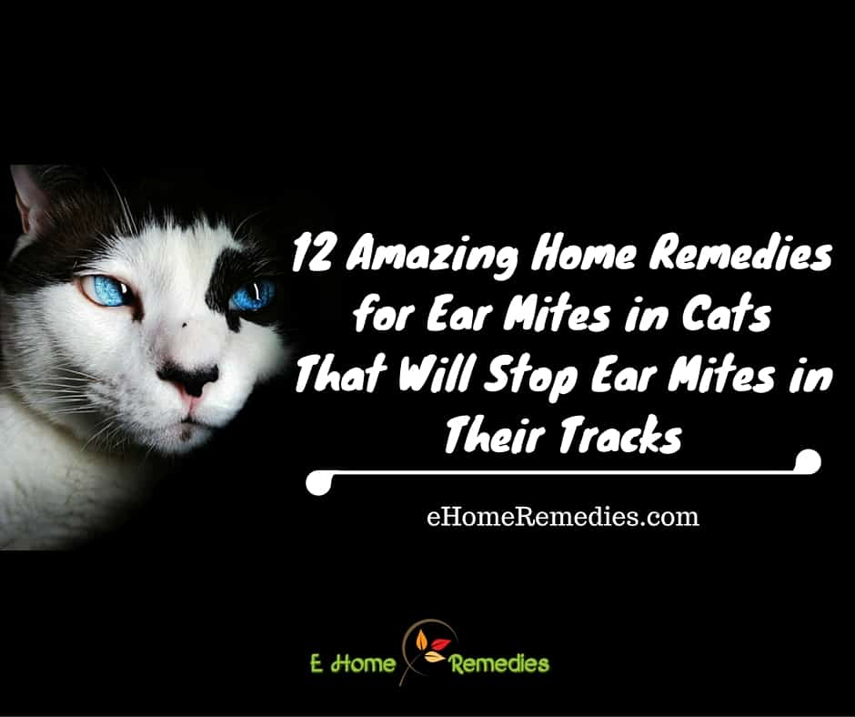 Natural Remedies For Ear Mites In Cats