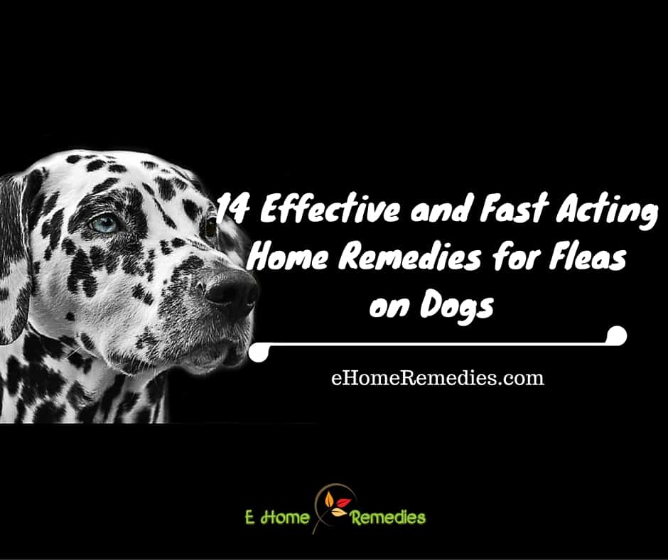 14 effective and fast acting home remedies for fleas on dogs - Home remedies to keep fleas away ...