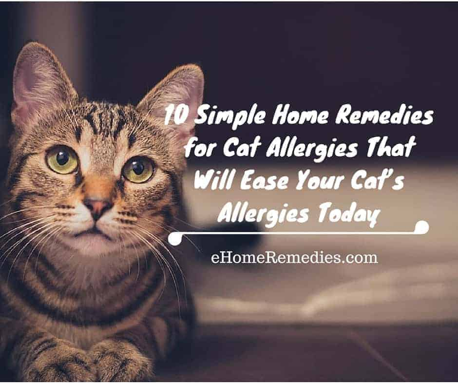 10 Simple Home Remedies for Cat Allergies That Will Ease Your Cat's Allergies Today