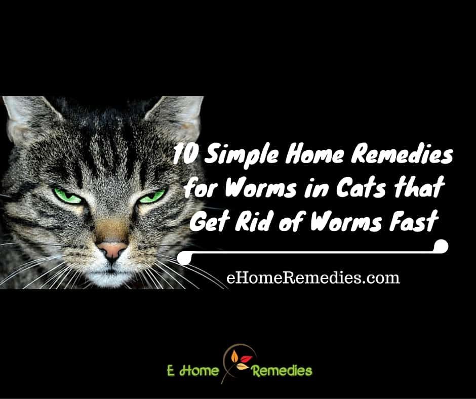Treat Cat Worms Naturally
