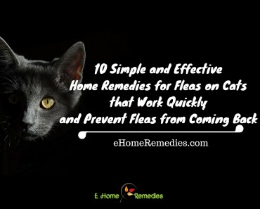 10 Simple and Effective Home Remedies for Fleas on Cats that Work Quickly and Prevent Fleas from Coming Back