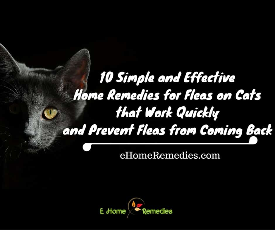 Home remes for fleas in carpet carpet vidalondon - Home remedies to keep fleas away ...
