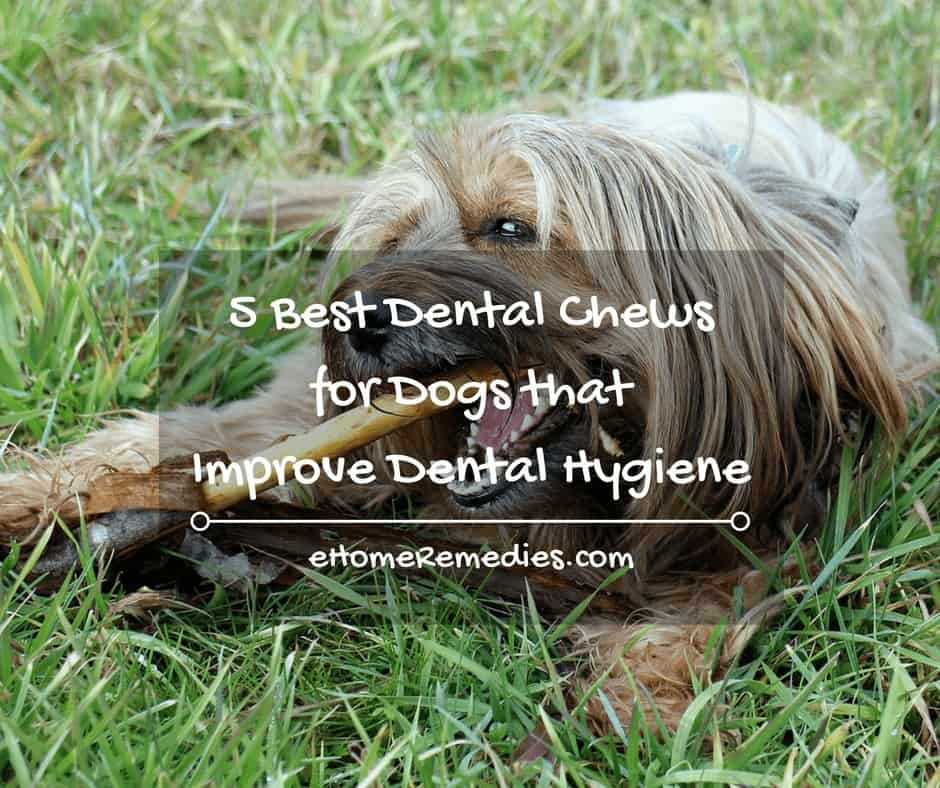 5 Best Dental Chews for Dogs that Improve Dental Hygiene