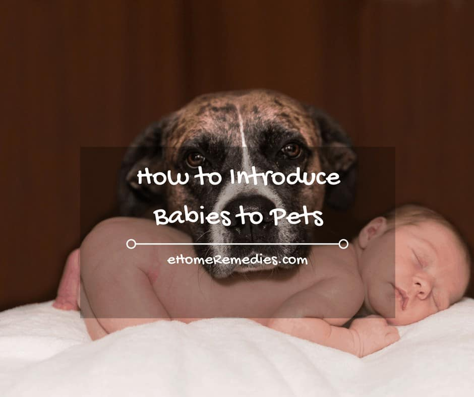 How to introduce babies to pets