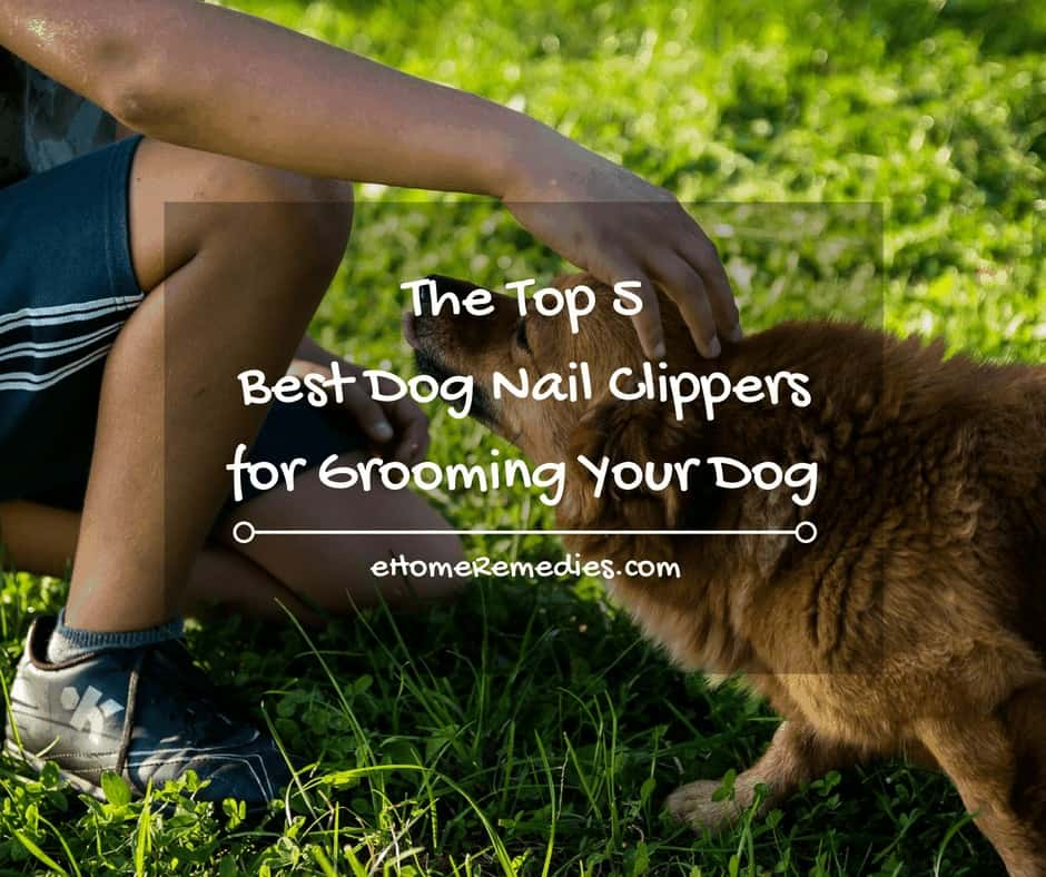 The Top 5 Best Dog Nail Clippers for Grooming Your Dog