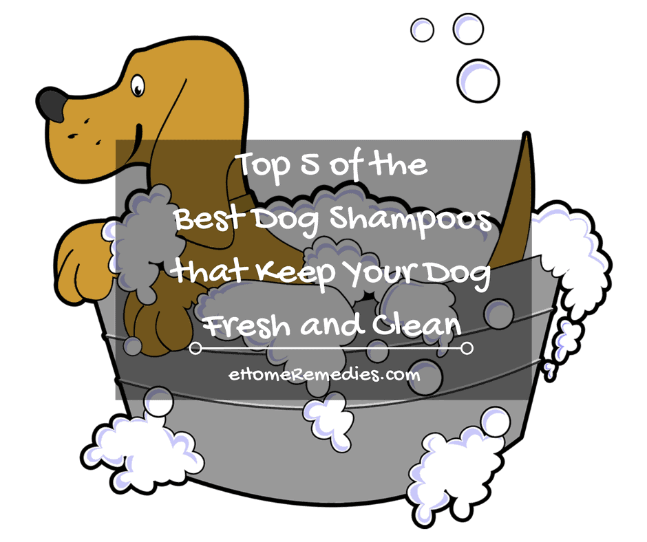 Top 5 of the Best Dog Shampoos that Keep Your Dog Fresh and Clean