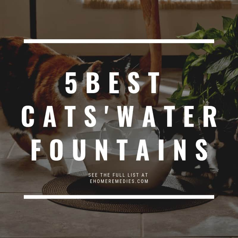 Best Cats' Water Fountains