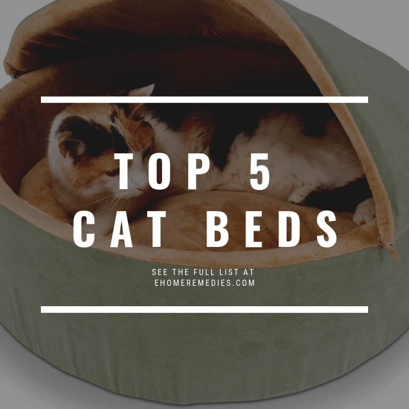 TOP 5 CAT BEDS