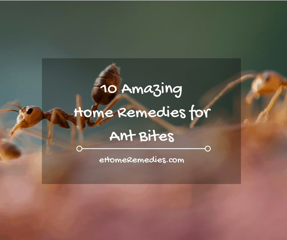 10 Amazing Home Remedies for Ant Bites