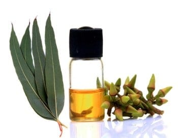 Eucalyptus-Essential-Oil-Indian-Origin