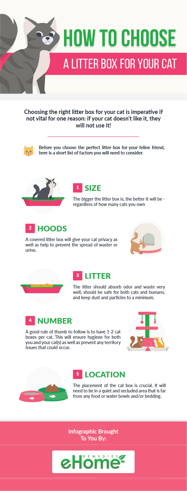 How to Choose a Litter Box for Your Cat Infographic