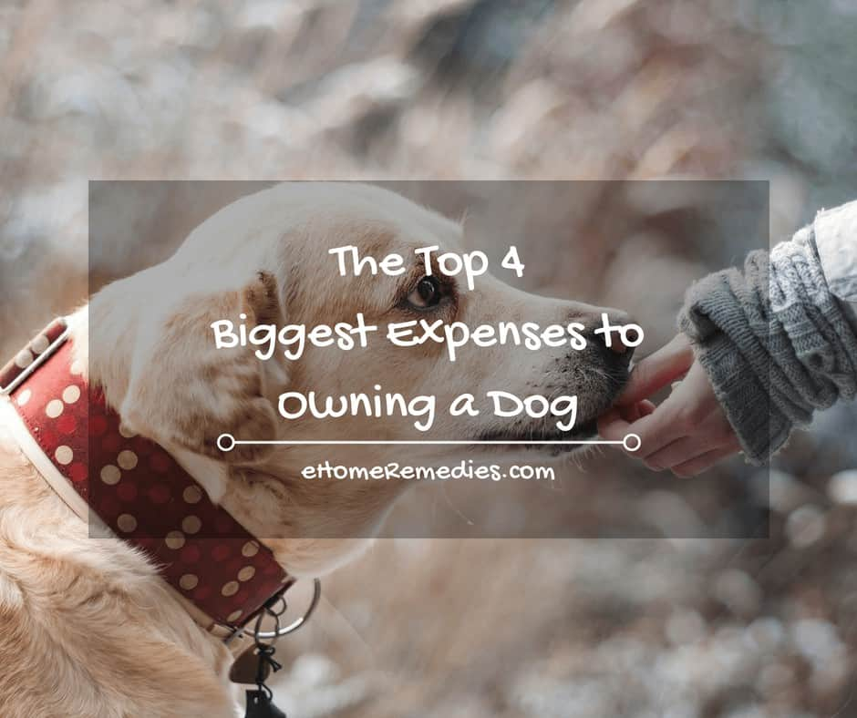 Biggest Expenses to Owning a Dog