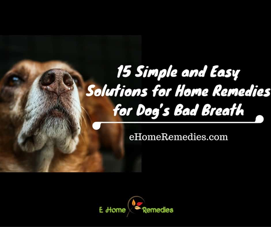 15 Simple and Easy Home Remedies for Dogs Bad Breath