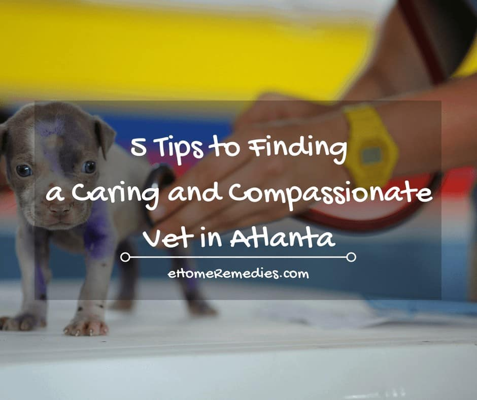 5 Tips to finding a caring and compassionate vet in Atlanta
