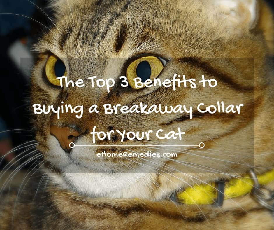 The top 3 benefits to buying a breakaway collar for your cat