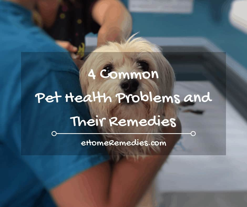 4 Common Pet Health Problems and Their Remedies