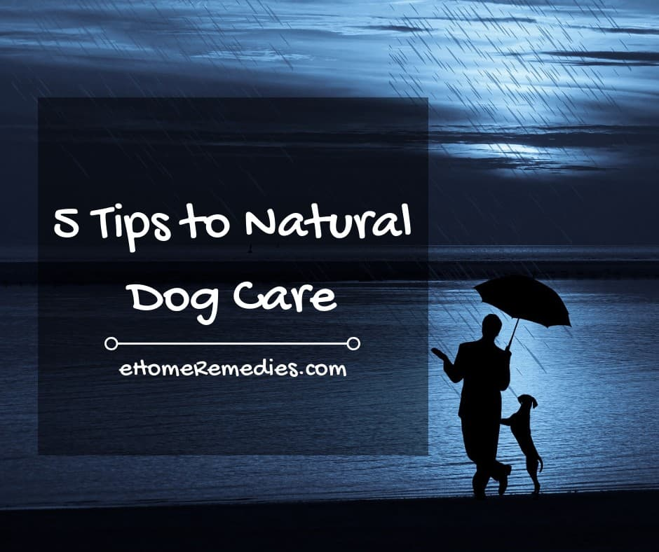 5 Tips to Natural Dog Care