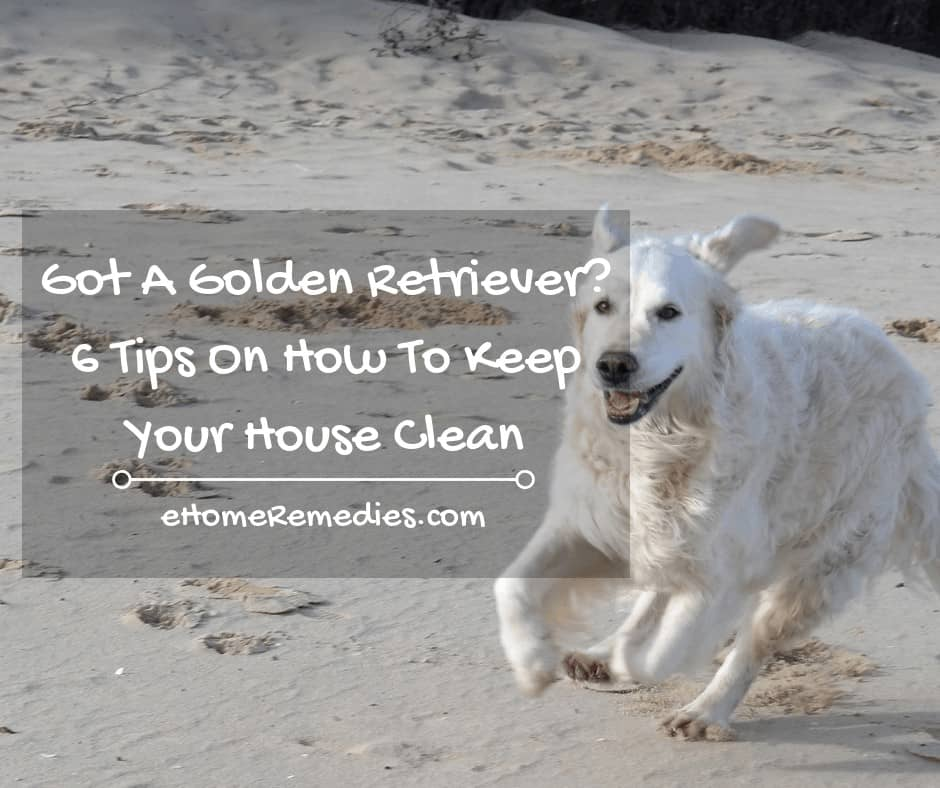 Got A Golden Retriever Here are 6 Tips On How To Keep Your House Clean