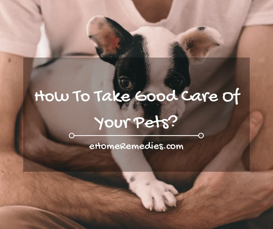 How To Take Good Care Of Your Pets