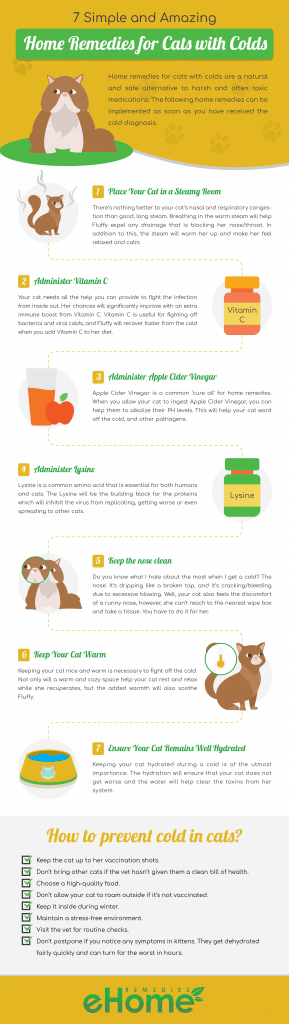 Infographic Home Remedies for Cats with Colds