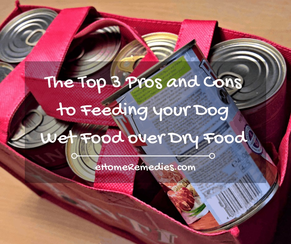 The Top 3 Pros and Cons to Feeding your Dog Wet Food over Dry Food