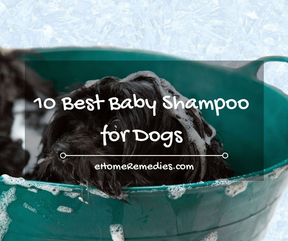 10 Best Baby Shampoo for Dogs