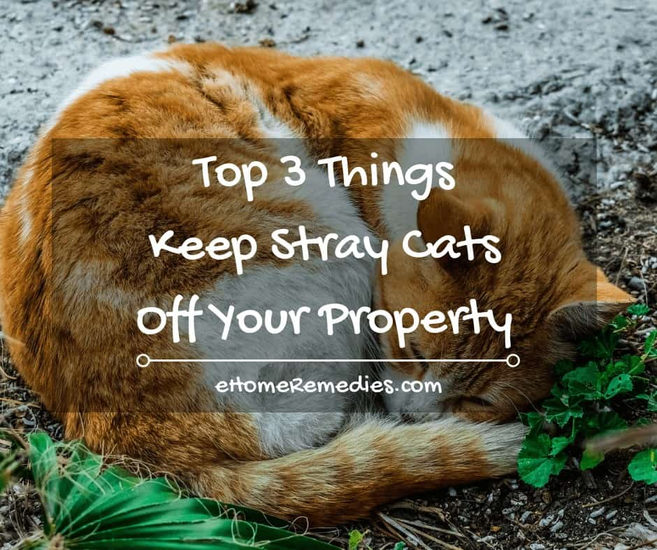 Top 3 Things You can do to Keep Stray Cats Off Your Property