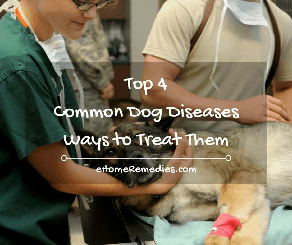 Top 4 Common Dog Diseases and Ways to Treat Them
