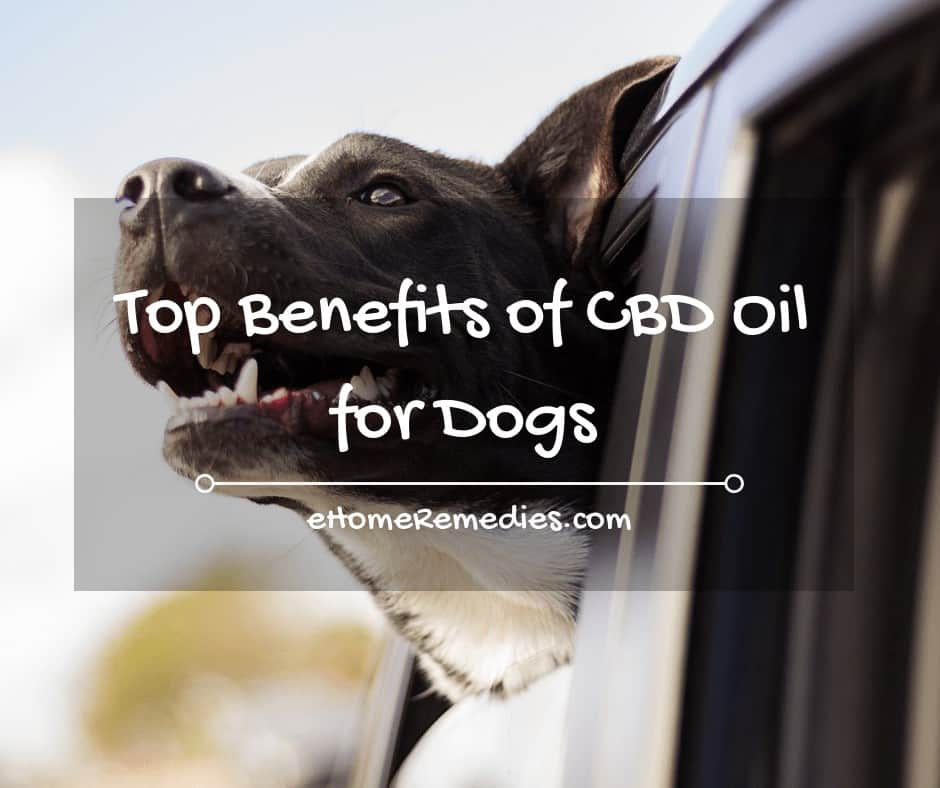 Top Benefits of CBD Oil for Dogs