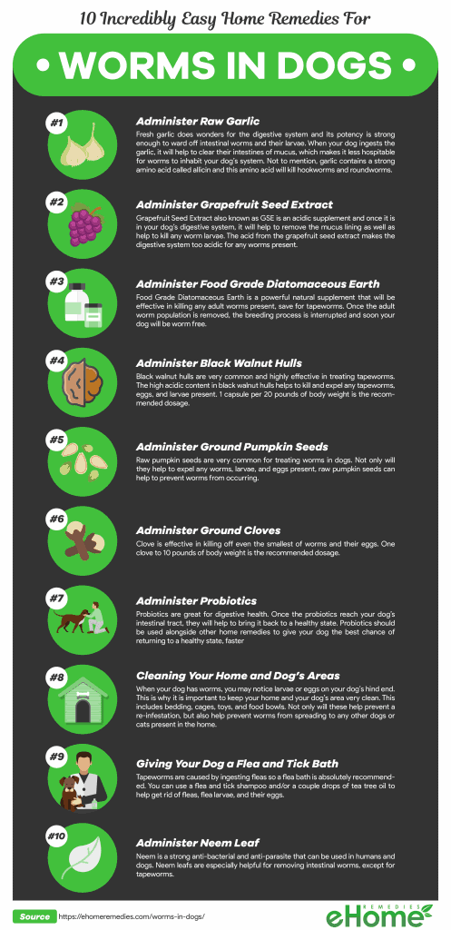 Home Remdies for Worms in Dogs Infographic