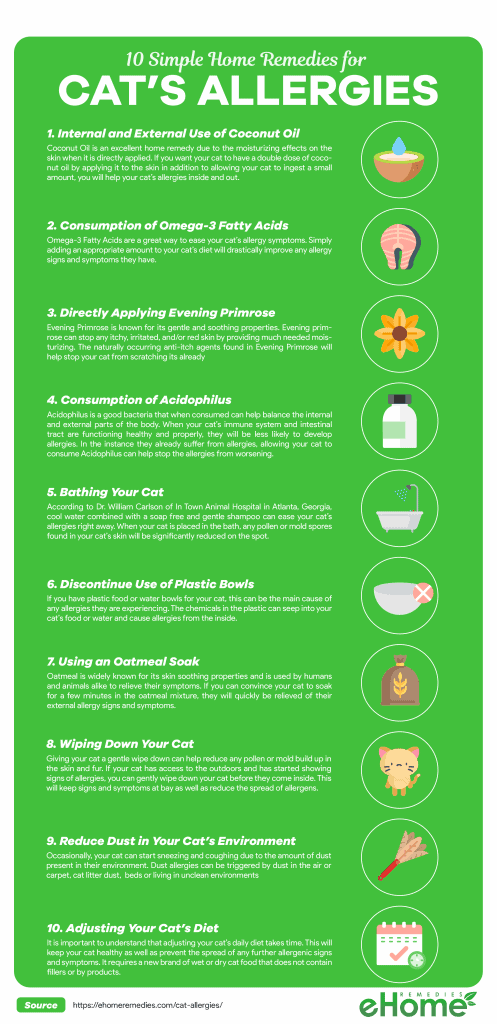 Home Remedies for Cats Allergies Infographic