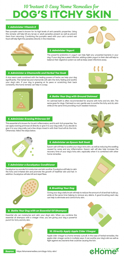 Home Remedies for Dogs Itchy Skin Infographic