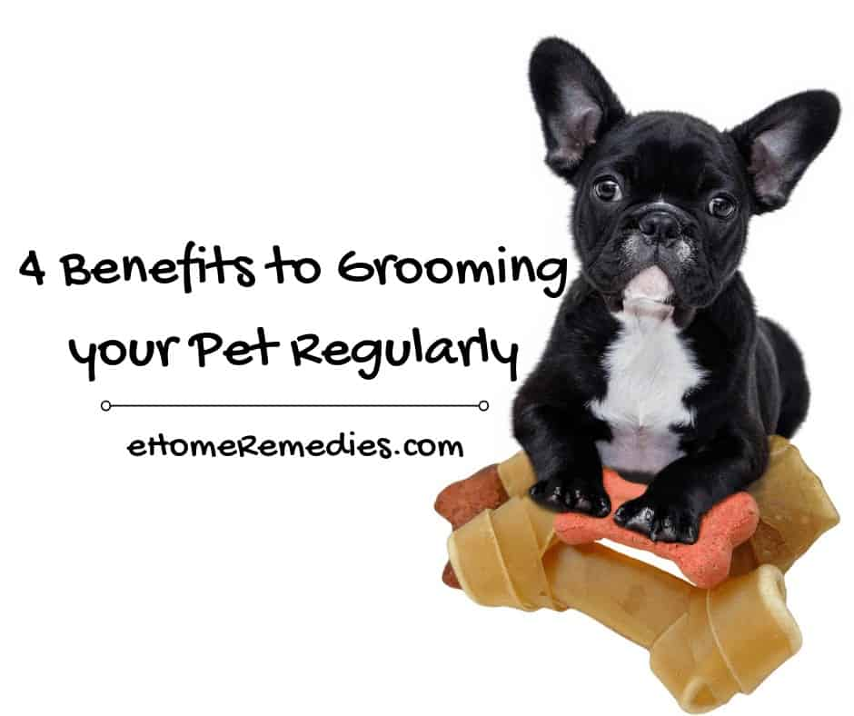 Benefits to Grooming your Pet