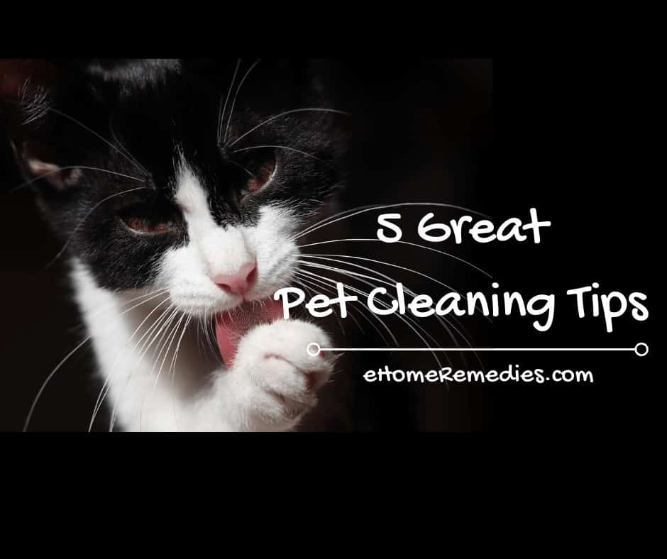 5 Great Pet Cleaning Tips
