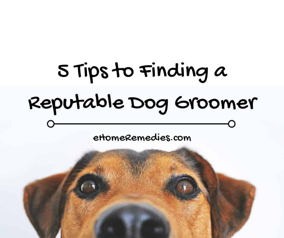 Finding a Reputable Dog Groomer