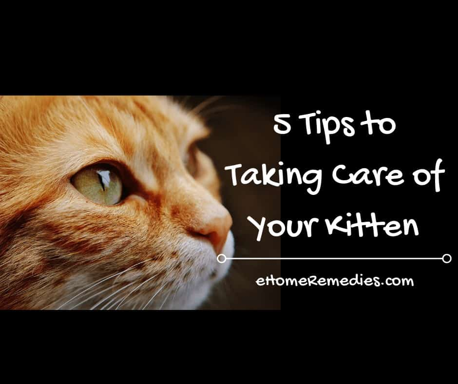 Taking Care of Your Kitten