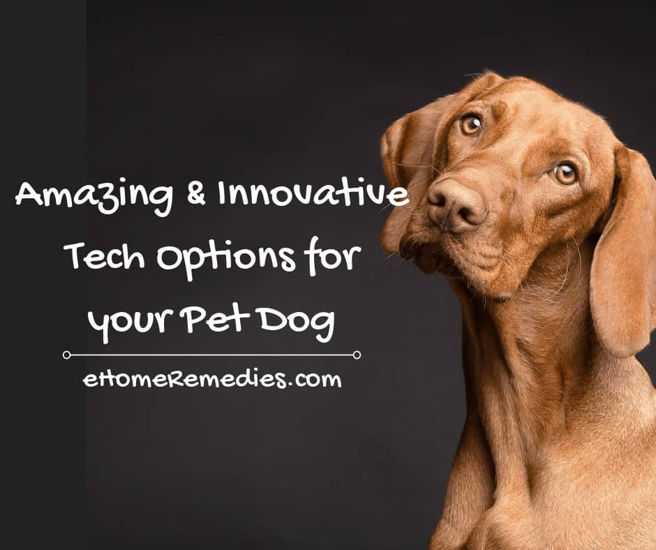 Amazing and Innovative Tech Options for your Pet Dog
