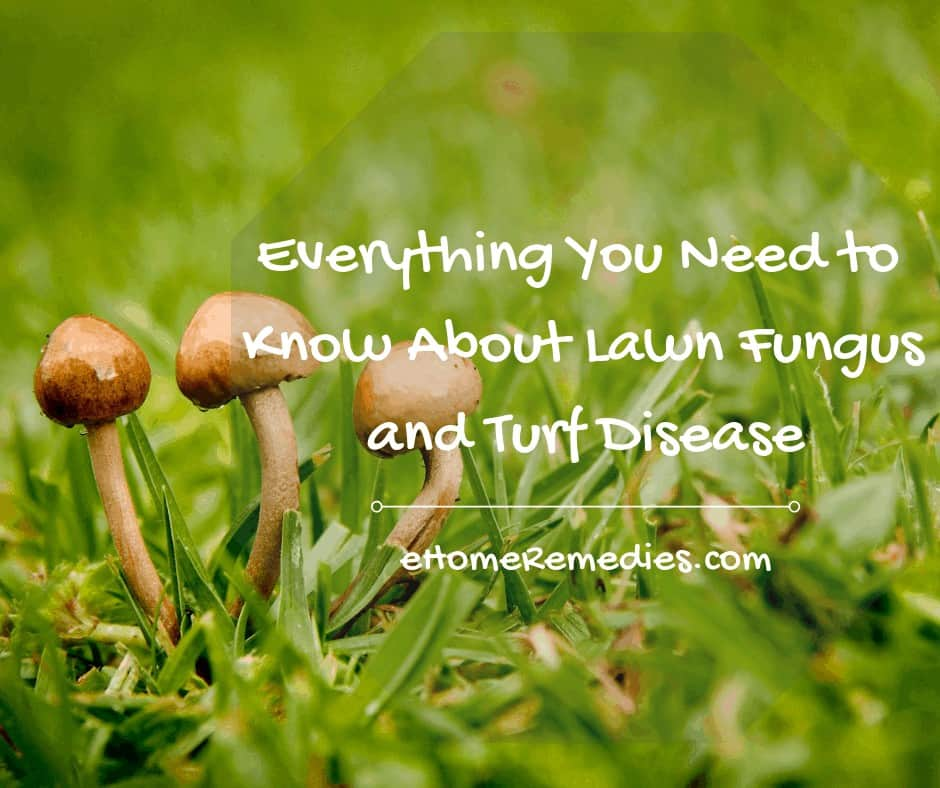 Lawn Fungus and Turf Disease