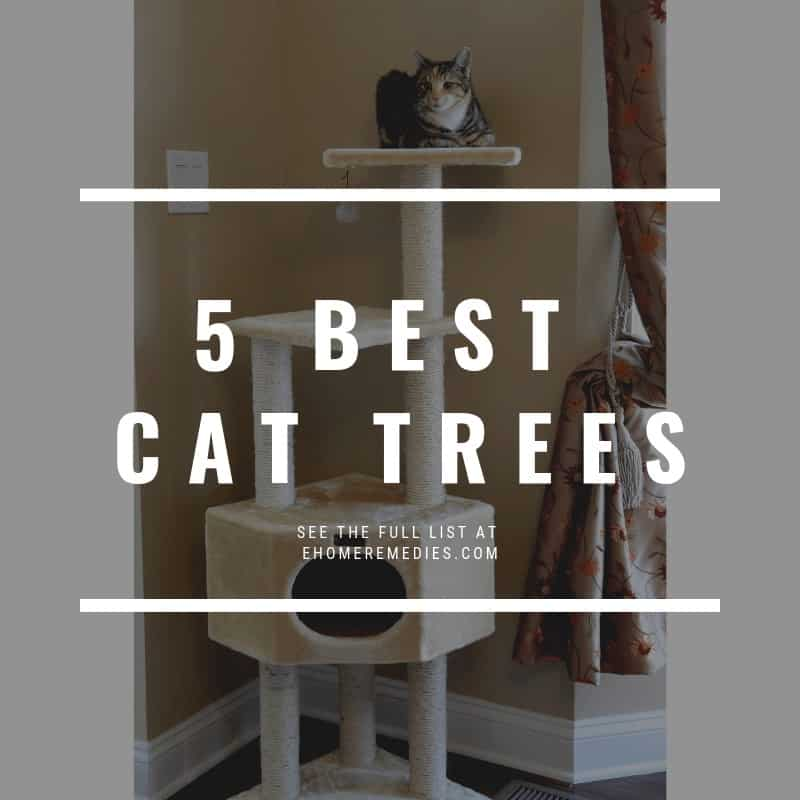 5 Best Cat Trees for Multiple Cats