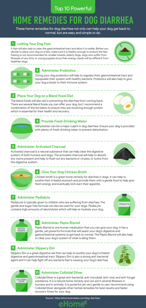 Home Remedies for Dog Diarrhea Infographic