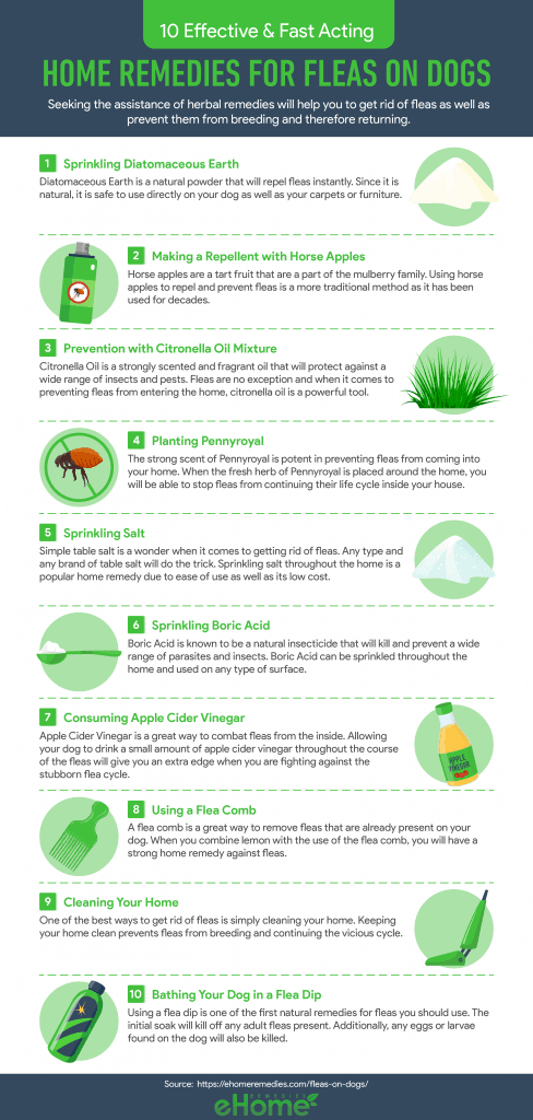 Home Remedies for Fleas Infographic