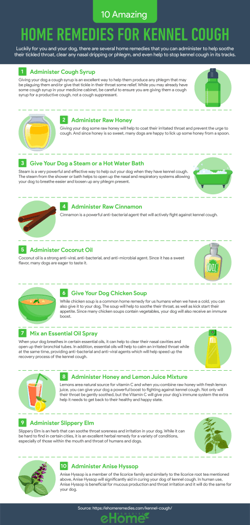 Home Remedies for Kennel Cough Infographic
