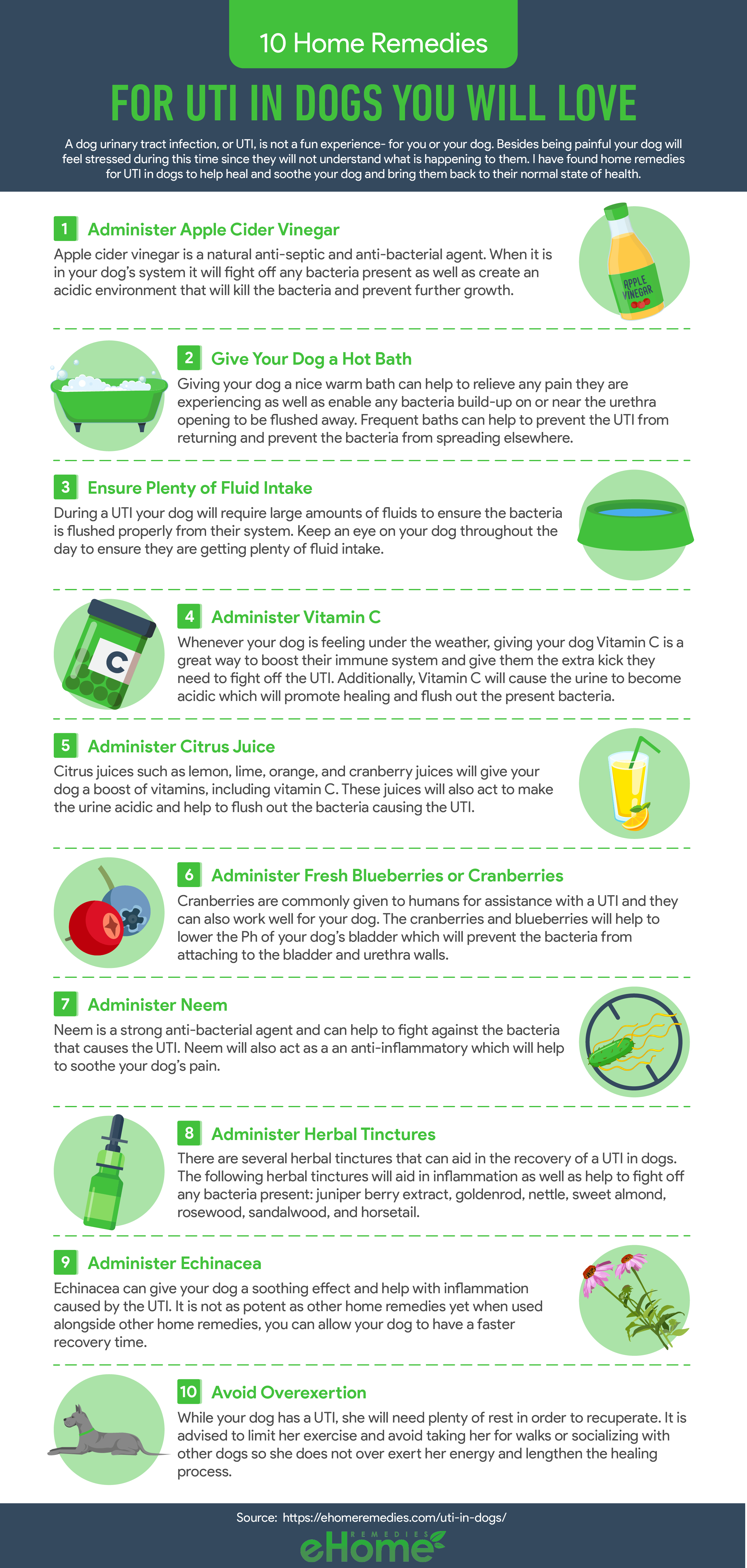 Home Remedies for Uti in Dogs Infographic
