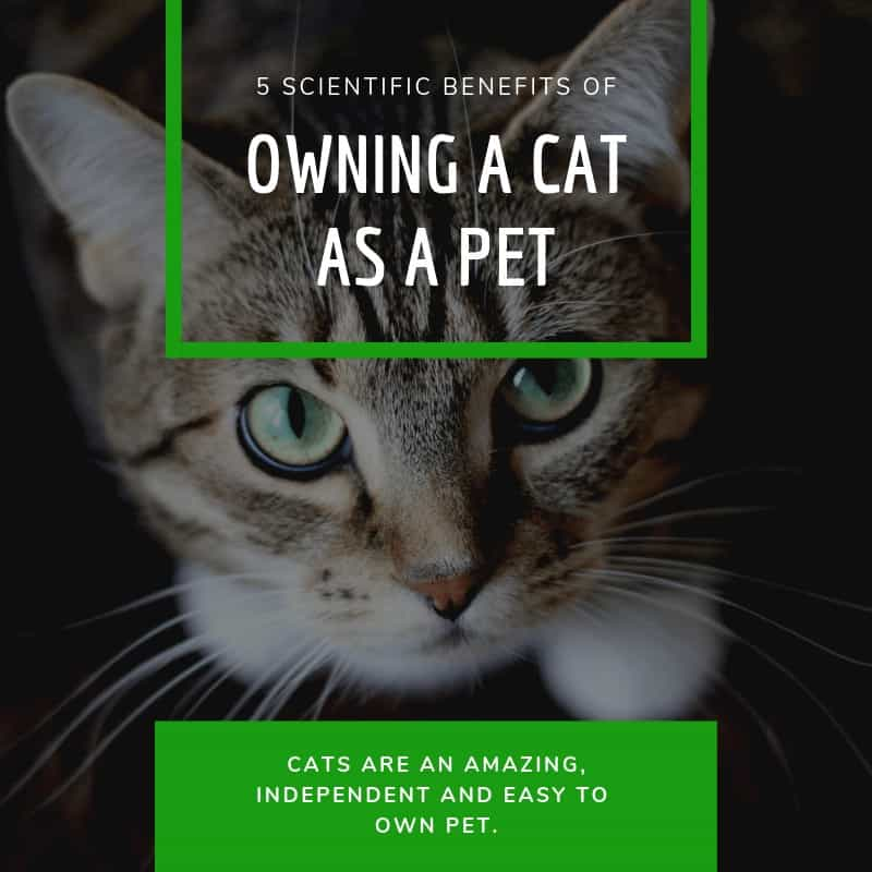 Scientific Benefits of Owning a Cat